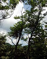 sky_and__tree